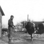 Russell Trant with Short Horn Bull, 1943