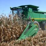 Maisdrescher in Aktion